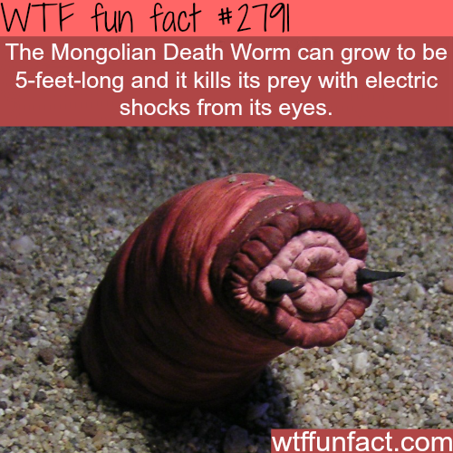 The mongolian death worm - WTF fun facts