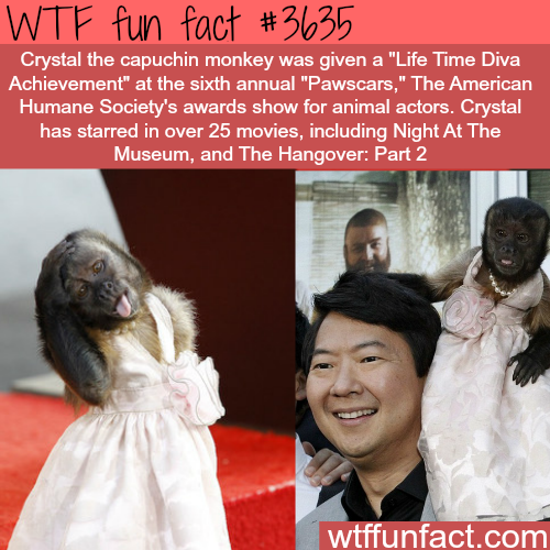 The monkey actor from The Hangover wins an award -  WTF fun facts