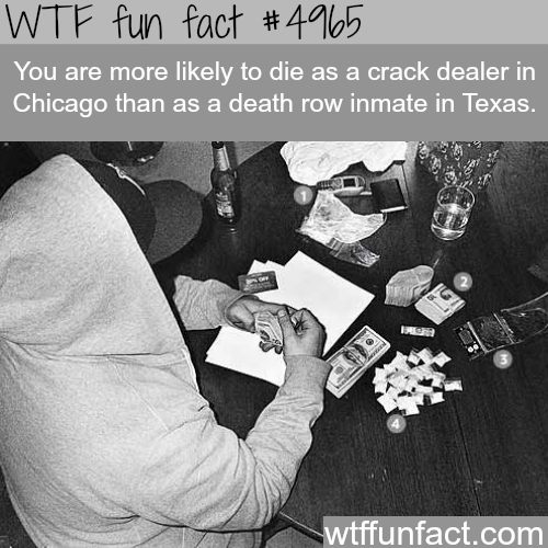 The most dangerous job in the world? - WTF fun facts