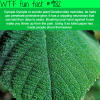 the most dangerous plant in the world wtf fun