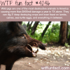 the most destructive animals in america wtf fun