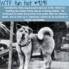 the most loyal dog wtf fun fact
