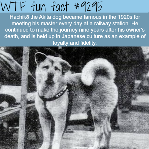 The most loyal dog - WTF fun fact