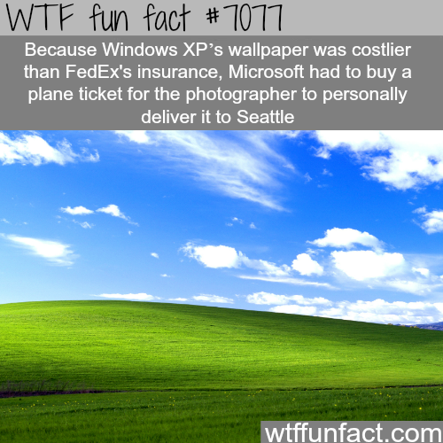 The most viewed photo in the world - WTF fun facts
