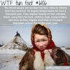 the nenet people wtf fun facts
