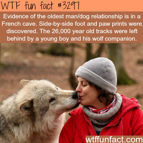 The oldest relationship with dogs -  WTF fun facts