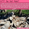 the oldest tree in the world wtf fun fact