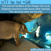 the oregon zoo elephant meets sea lions