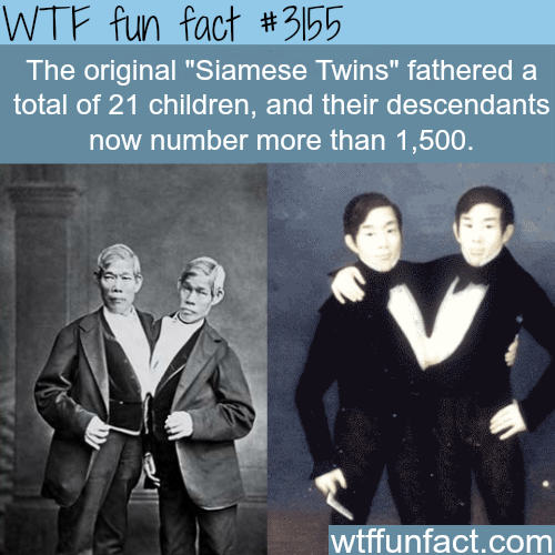 "The original ""Siamese Twins"" -  WTF fun facts"