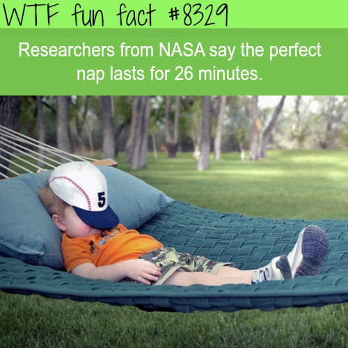 The perfect nap - SUBSCRIBE to our YOUTUBE CHANNEL