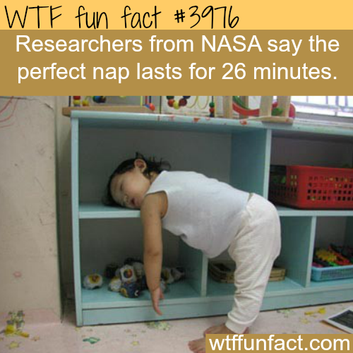 The perfect nap - WTF fun facts