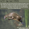 the platypus doesnt exist wtf fun fact