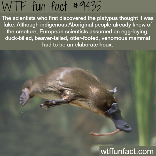 The Platypus doesn't exist - WTF fun fact