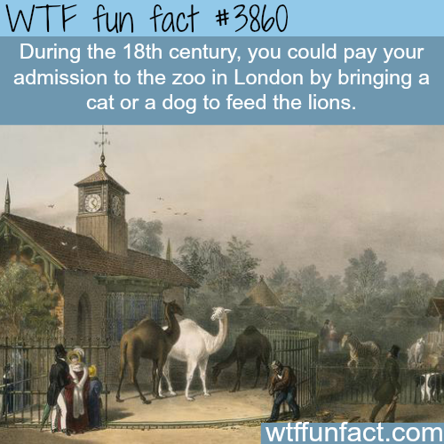 The price of a ticket to the zoo during the 18th century - WTF fun facts