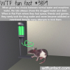 the rat park experiment wtf fun facts