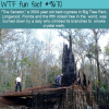 the senator a 3500 year old bald cypress in big