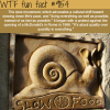 the slow movement wtf fun facts