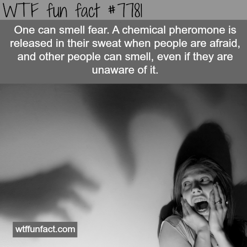 The smell of fear - WTF fun facts