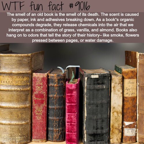 The smell of old books - WTF fun facts
