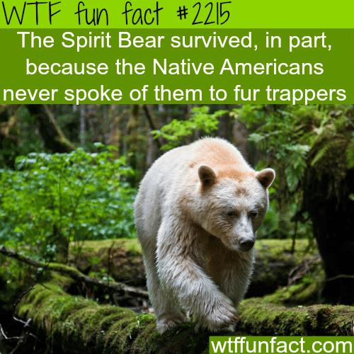 The spirit Bear -WTF fun facts