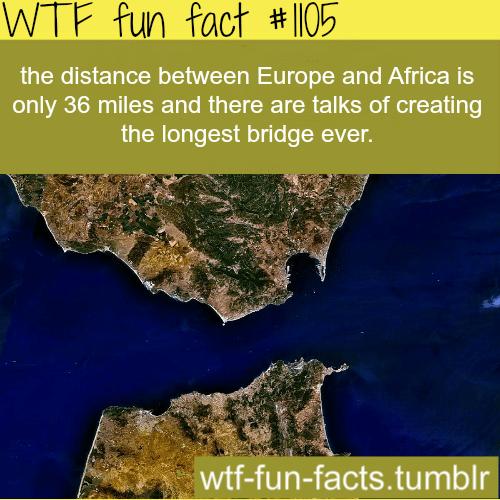 (SOURCE) longest bridge in the world –The Strait of Gibraltar