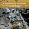the suicide rates in apple factory wtf fun fact