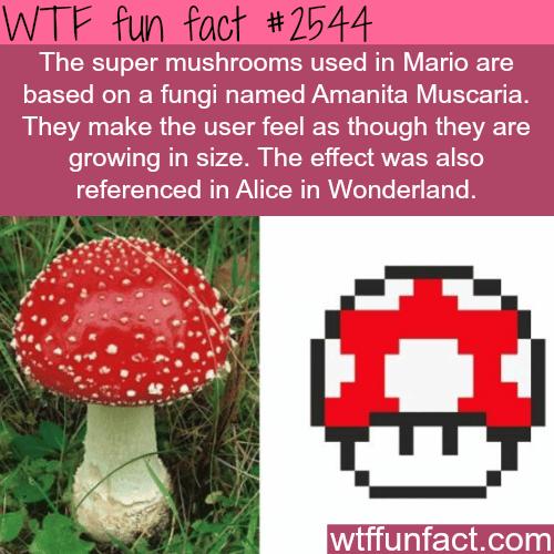 The super mario mushrooms: Amanita Muscaria -WTF funfacts