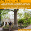 the tree that owns itself wtf fun facts
