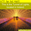 the tunnel of lights ireland wtf fun facts