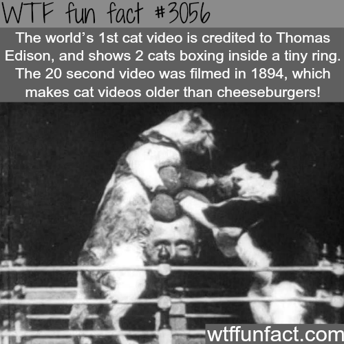 The world's first cat video is older than cheeseburgers -WTF fun facts