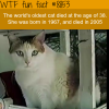 the worlds oldest cat wtf fun facts
