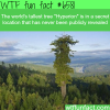 the worlds tallest tree wtf fun facts