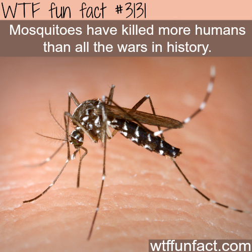 The worst creatures on earth
