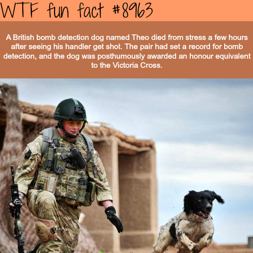 Theo the dog - WTF fun fact
