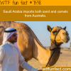 things you never knew about saudi arabia wtf fun
