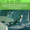 things you never knew about the statue of liberty