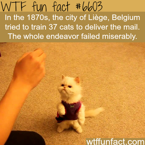 This Belgian city tried to train cats to deliver mail - WTF fun facts
