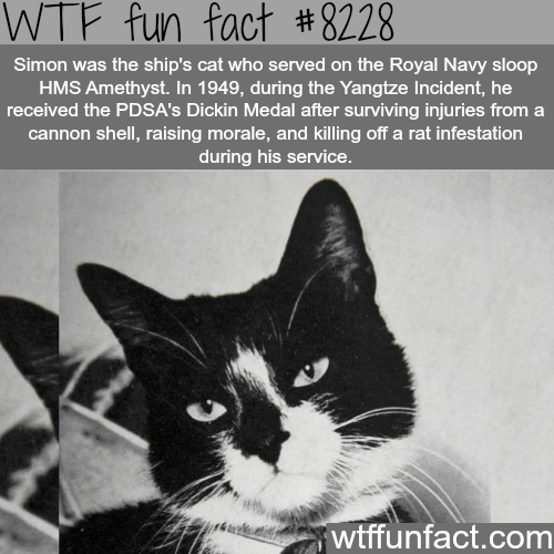 This cat got a medal - WTF fun facts