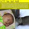 this cat saved an abandon baby in the snow wtf