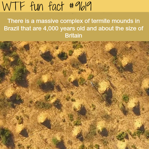 This complex of termite mounds is the same size as Britain  - WTF fun fact