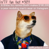 this dog make 180000 a year modeling