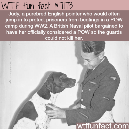 This dog saved prisoners of war from beatings - WTF Fun Fact