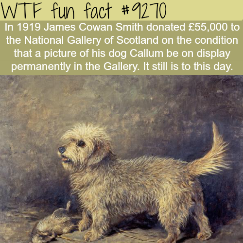 This Man Donated about $3 million to a museum…- WTF fun facts