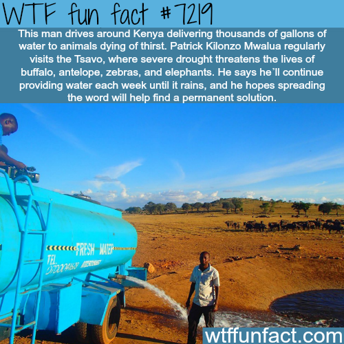 This man in Kenya provides water to thirsty animals - WTF Fun Fact