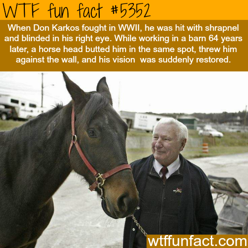 This man's blind eye vision was restored after being hit by a horse - WTF fun facts