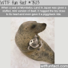 this seal in japan is in love with a stuffed toy