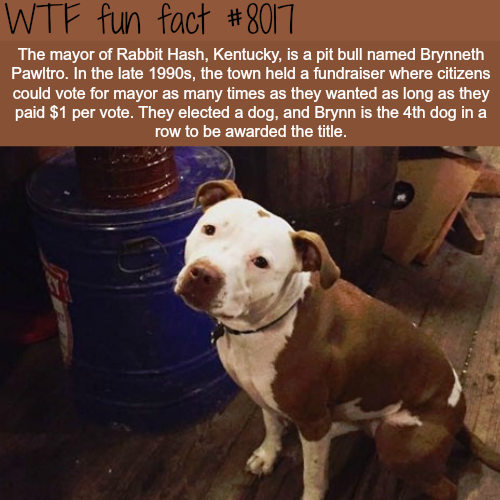 This town has a dog as a mayor - WTF fun fact
