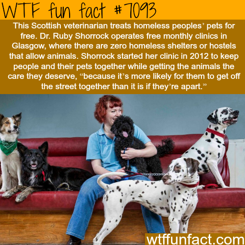 This veterinarian treats homeless people's pet for free - WTF fun facts