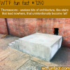 thomassons wtf fun fact
