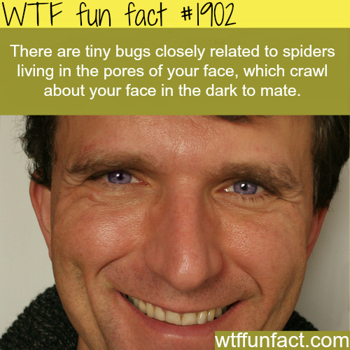 Tiny bugs living on your pores - WTF fun facts